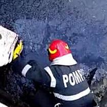 Trei câini care au căzut într-un bazin cu smoală, salvați de pompierii timișoreni