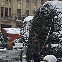 Arborele Vietii din centrul Timisoarei, tinut in viata cu un tratament mai special