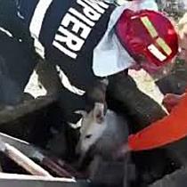 Cațea salvată de pompieri dintr-un canal cu apă, la Timișoara