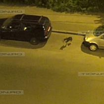 La Danyflor nu se aud cainii care latra noaptea pe Calea Martirilor din Timisoara