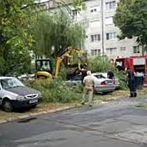 Copac cazut peste masini